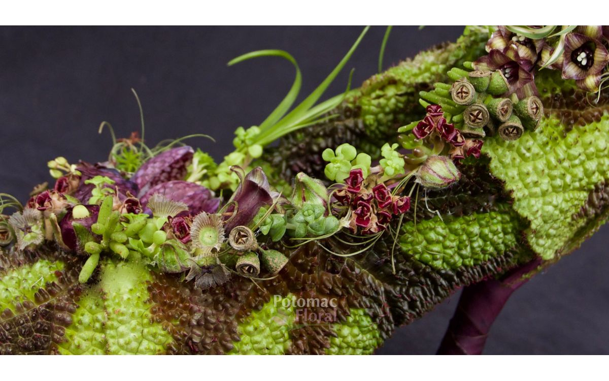 Fashion Forward – Wearable Flowers